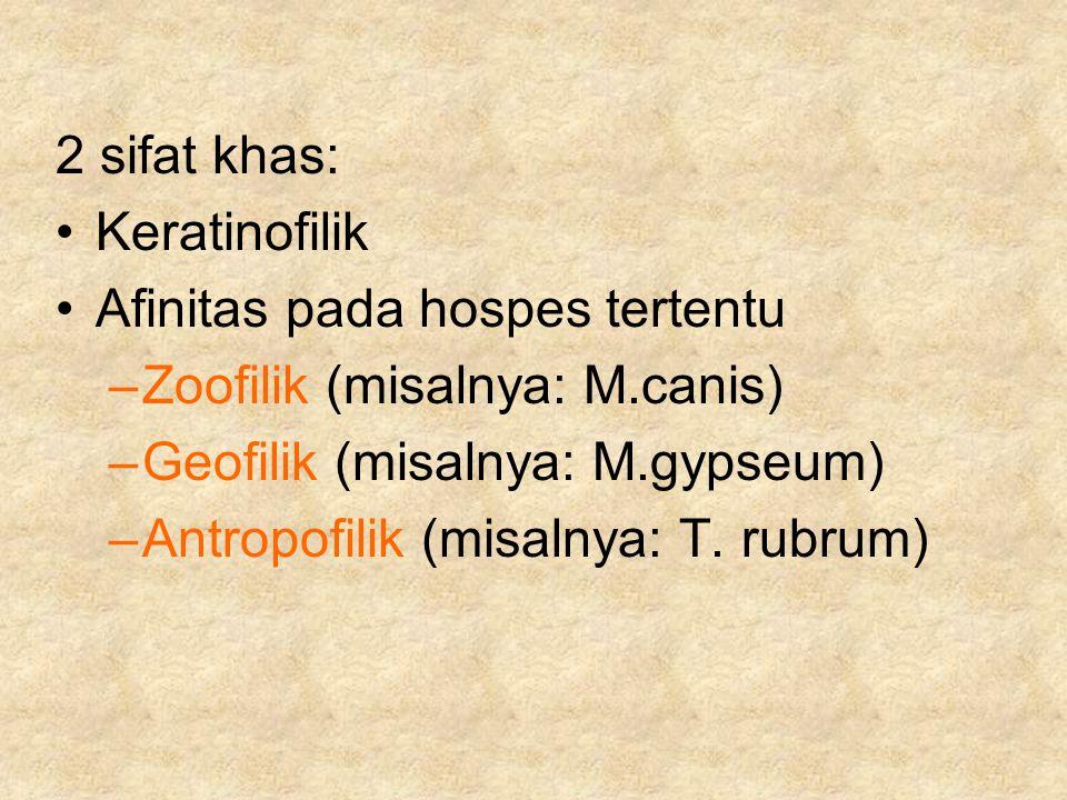2 sifat khas: Keratinofilik Afinitas pada hospes tertentu –Zoofilik (misalnya: M.canis) –Geofilik (misalnya: M.gypseum) –Antropofilik (misalnya: T. ru