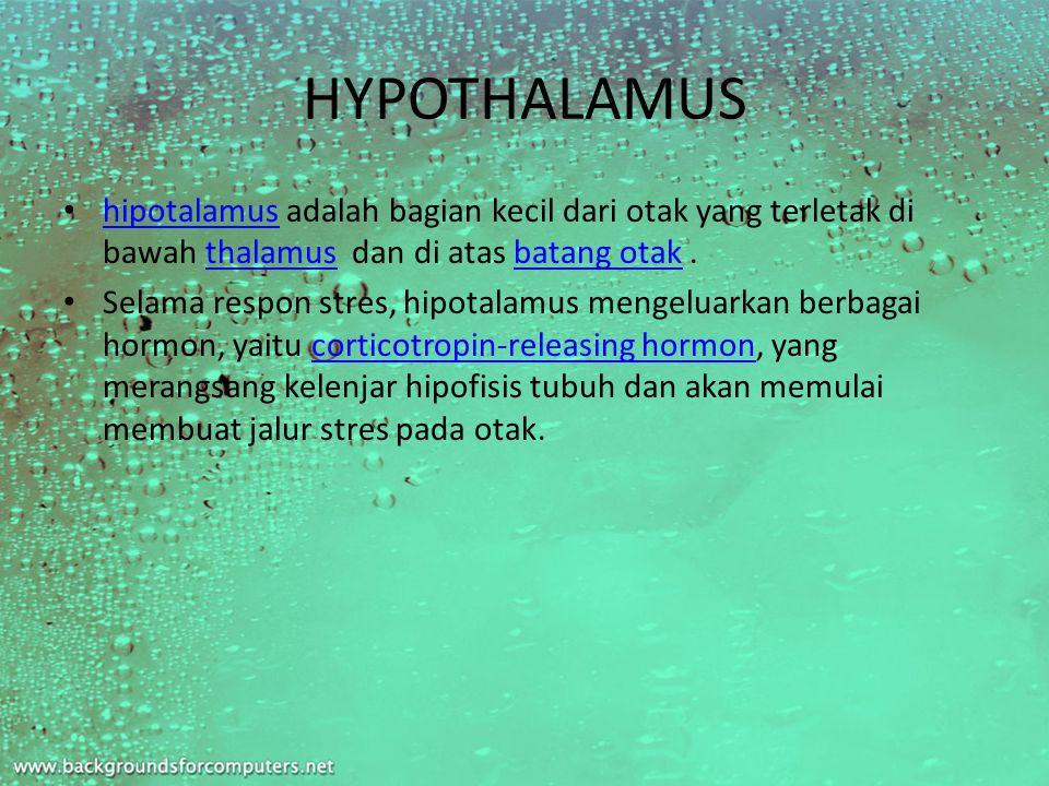 HYPOTHALAMUS hipotalamus adalah bagian kecil dari otak yang terletak di bawah thalamus dan di atas batang otak.