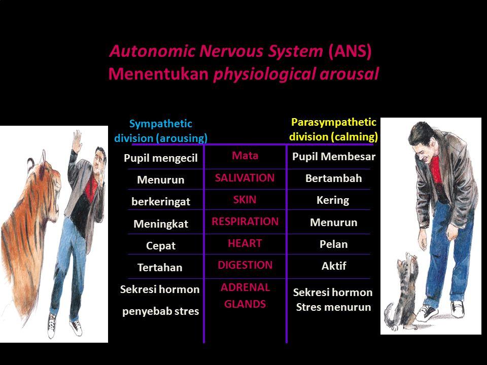 Physically Arousal emosi kesmen pertemuan ke 12 baru Autonomic Nervous System (ANS) Menentukan physiological arousal Sympathetic division (arousing) Pupil mengecil Menurun berkeringat Meningkat Cepat Tertahan Sekresi hormon penyebab stres Parasympathetic division (calming) Pupil Membesar Bertambah Kering Menurun Pelan Aktif Sekresi hormon Stres menurun Mata SALIVATION SKIN RESPIRATION HEART DIGESTION ADRENAL GLANDS