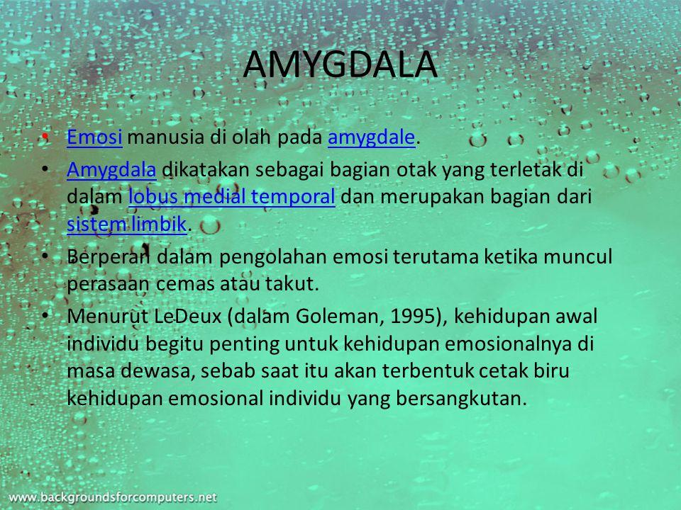 AMYGDALA Emosi manusia di olah pada amygdale.