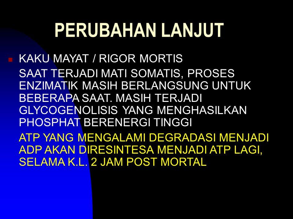 PERUBAHAN LANJUT KAKU MAYAT / RIGOR MORTIS SAAT TERJADI MATI SOMATIS, PROSES ENZIMATIK MASIH BERLANGSUNG UNTUK BEBERAPA SAAT. MASIH TERJADI GLYCOGENOL
