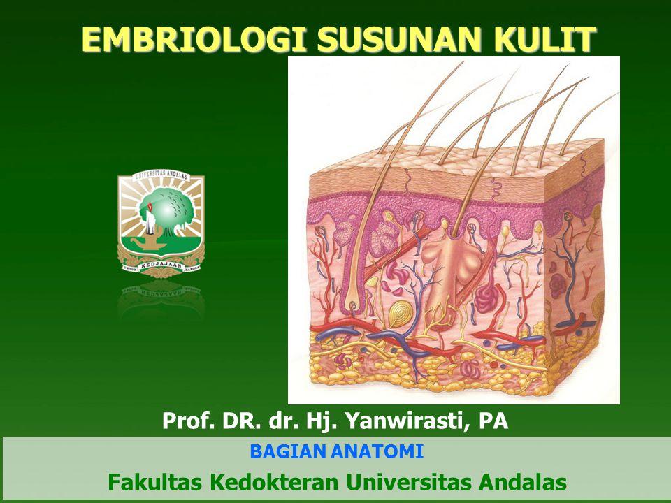 EMBRIOLOGI SUSUNAN KULIT Prof. DR. dr. Hj. Yanwirasti, PA BAGIAN ANATOMI Fakultas Kedokteran Universitas Andalas