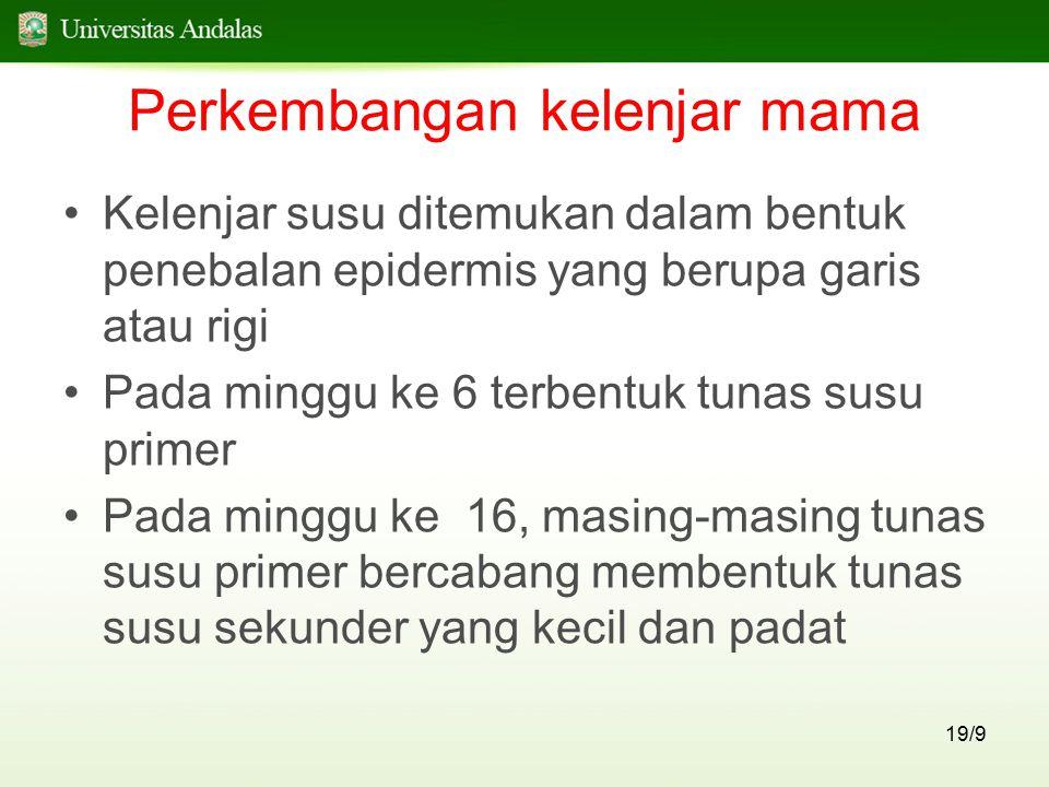 19/9 Perkembangan kelenjar mama Kelenjar susu ditemukan dalam bentuk penebalan epidermis yang berupa garis atau rigi Pada minggu ke 6 terbentuk tunas