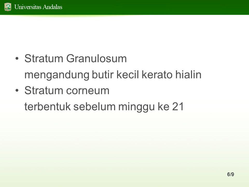 6/9 Stratum Granulosum mengandung butir kecil kerato hialin Stratum corneum terbentuk sebelum minggu ke 21