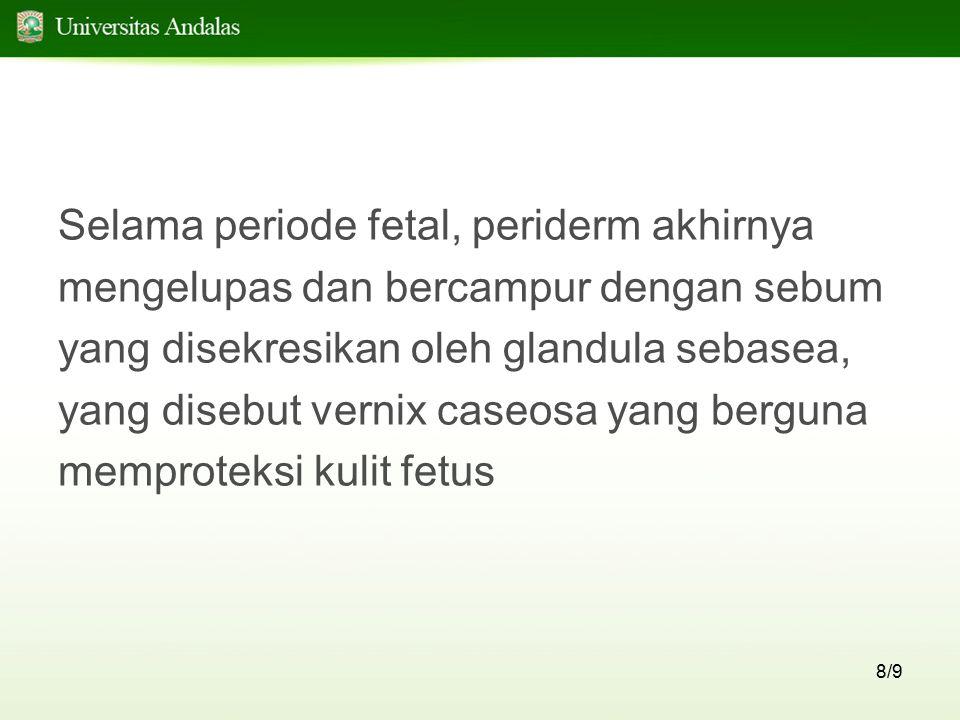 8/9 Selama periode fetal, periderm akhirnya mengelupas dan bercampur dengan sebum yang disekresikan oleh glandula sebasea, yang disebut vernix caseosa