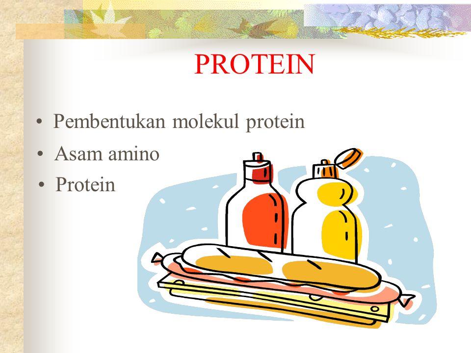 PROTEIN Asam amino Protein Pembentukan molekul protein