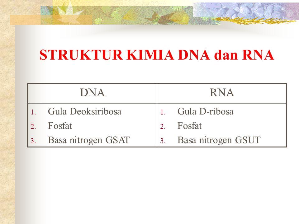 STRUKTUR KIMIA DNA dan RNA DNARNA 1. Gula Deoksiribosa 2. Fosfat 3. Basa nitrogen GSAT 1. Gula D-ribosa 2. Fosfat 3. Basa nitrogen GSUT