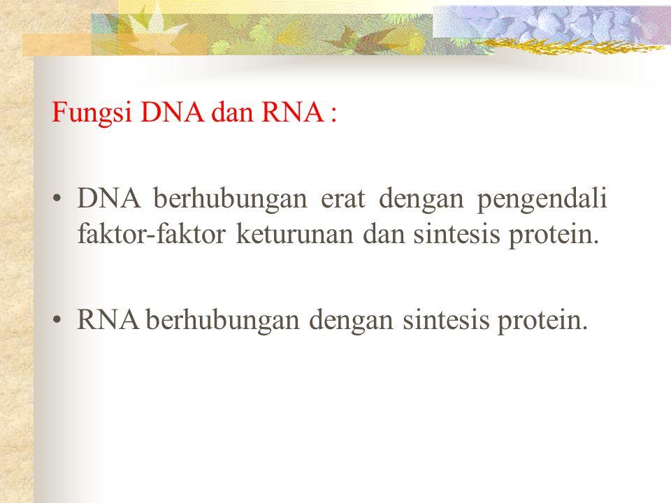 Fungsi DNA dan RNA : DNA berhubungan erat dengan pengendali faktor-faktor keturunan dan sintesis protein. RNA berhubungan dengan sintesis protein.