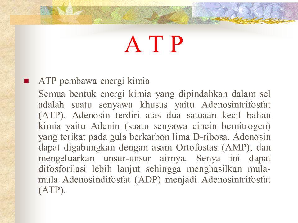 A T P ATP pembawa energi kimia Semua bentuk energi kimia yang dipindahkan dalam sel adalah suatu senyawa khusus yaitu Adenosintrifosfat (ATP). Adenosi