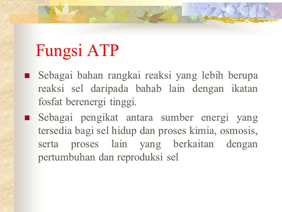 Fungsi ATP Sebagai bahan rangkai reaksi yang lebih berupa reaksi sel daripada bahab lain dengan ikatan fosfat berenergi tinggi. Sebagai pengikat antar