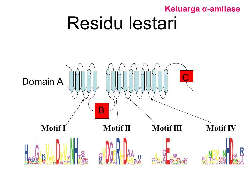 Residu lestari Motif IMotif IIMotif III B C Domain A Motif IV Keluarga α-amilase