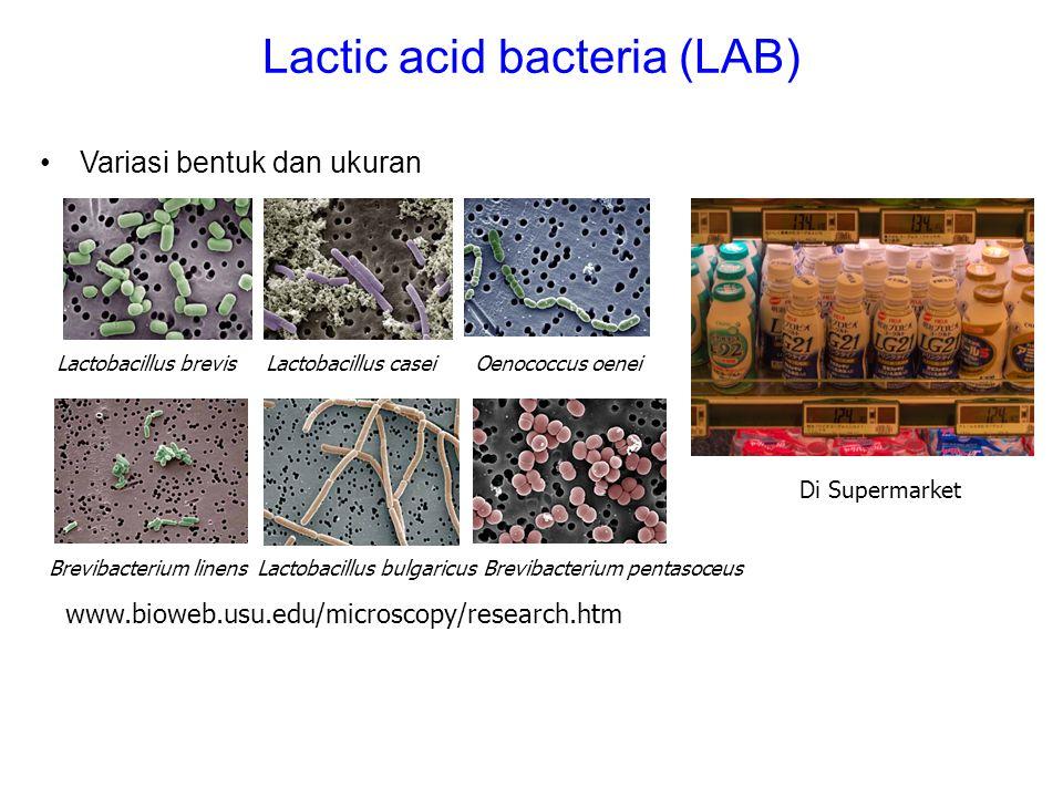 Lactic acid bacteria (LAB) Lactobacillus brevisLactobacillus caseiOenococcus oenei Variasi bentuk dan ukuran Brevibacterium linensLactobacillus bulgar