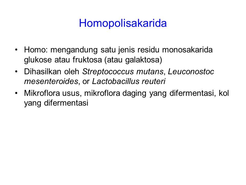 Homopolisakarida Homo: mengandung satu jenis residu monosakarida glukose atau fruktosa (atau galaktosa) Dihasilkan oleh Streptococcus mutans, Leuconos