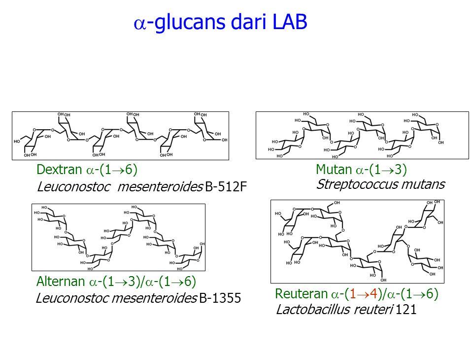 Dextran  -(1  6) Reuteran  -(1  4)/  -(1  6)  -glucans dari LAB Mutan  -(1  3) Alternan  -(1  3)/  -(1  6) Leuconostoc mesenteroides B-51