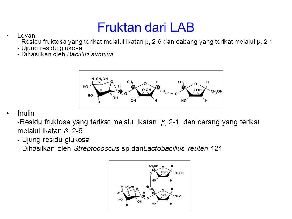 Fruktan dari LAB Levan - Residu fruktosa yang terikat melalui ikatan , 2-6 dan cabang yang terikat melalui , 2-1 - Ujung residu glukosa - Dihasilkan