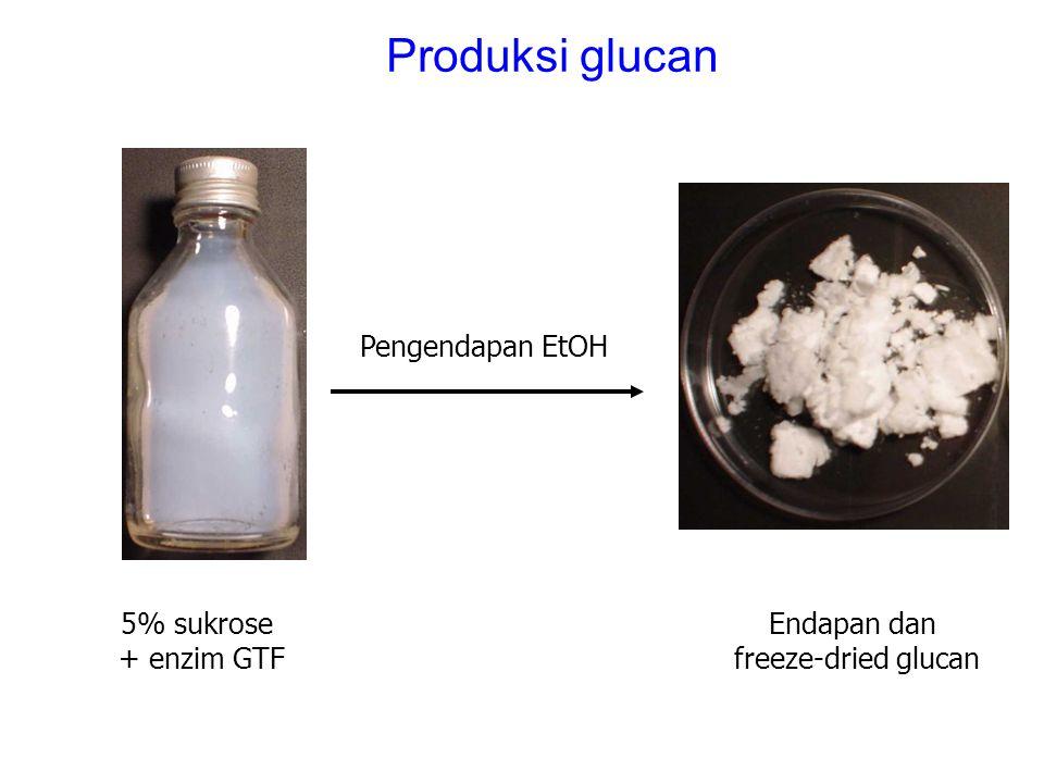 Produksi glucan Pengendapan EtOH 5% sukrose + enzim GTF Endapan dan freeze-dried glucan
