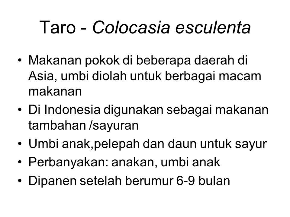 Taro - Colocasia esculenta Makanan pokok di beberapa daerah di Asia, umbi diolah untuk berbagai macam makanan Di Indonesia digunakan sebagai makanan t