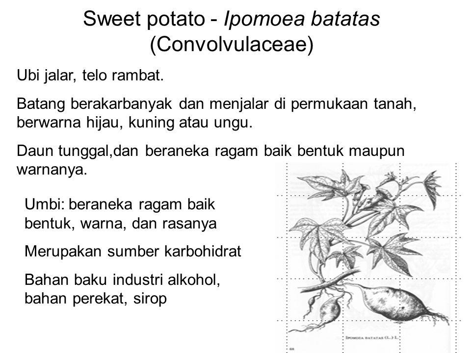 Sweet potato - Ipomoea batatas (Convolvulaceae) Ubi jalar, telo rambat. Batang berakarbanyak dan menjalar di permukaan tanah, berwarna hijau, kuning a