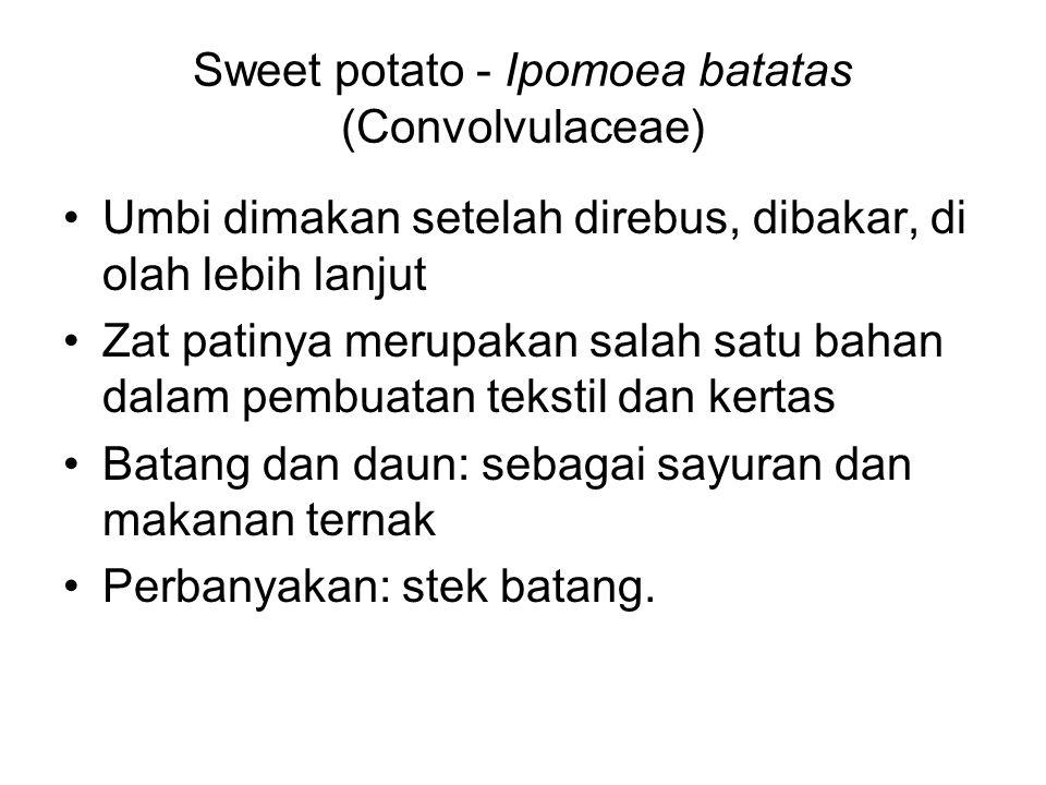 Sweet potato - Ipomoea batatas (Convolvulaceae) Umbi dimakan setelah direbus, dibakar, di olah lebih lanjut Zat patinya merupakan salah satu bahan dal