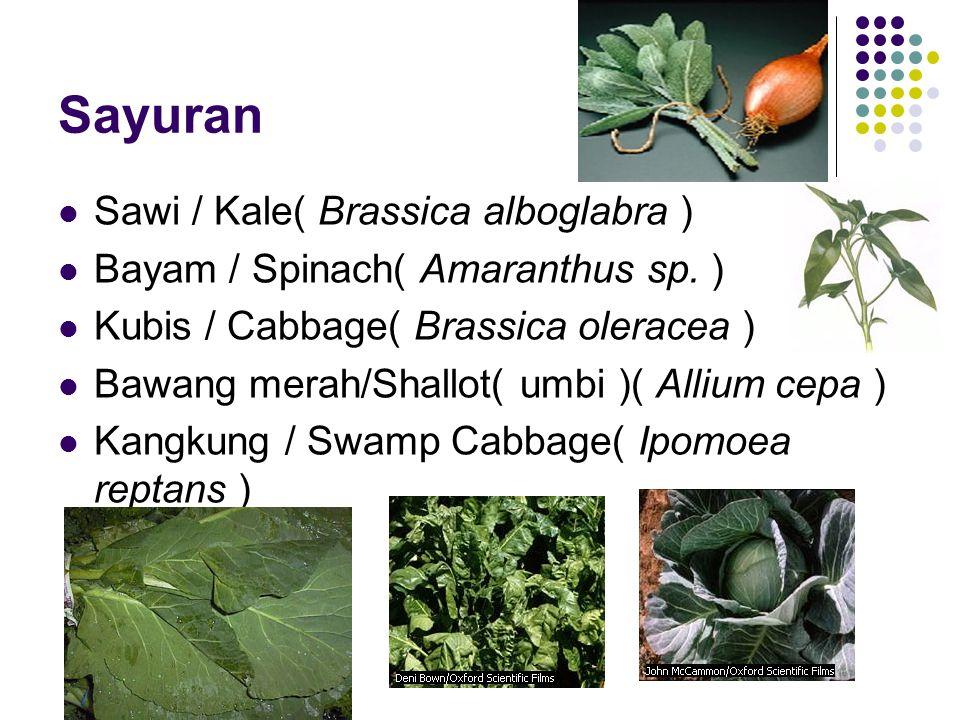 Sayuran Sawi / Kale( Brassica alboglabra ) Bayam / Spinach( Amaranthus sp.
