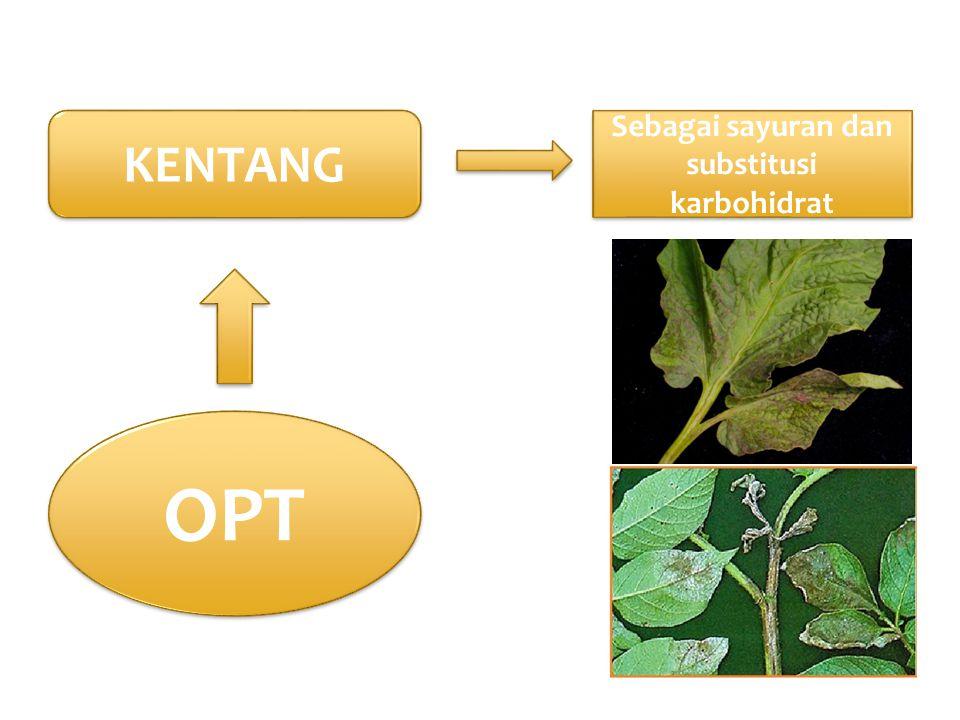 Sebagai sayuran dan substitusi karbohidrat OPT