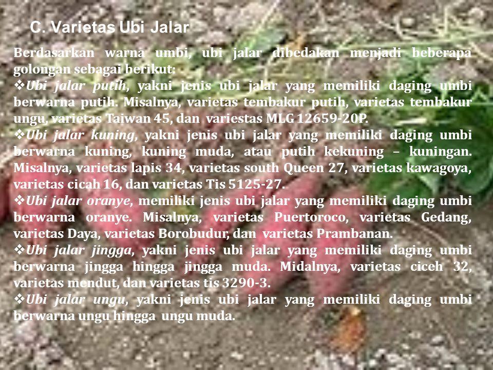 C. Varietas Ubi Jalar Berdasarkan warna umbi, ubi jalar dibedakan menjadi beberapa golongan sebagai berikut:  Ubi jalar putih, yakni jenis ubi jalar