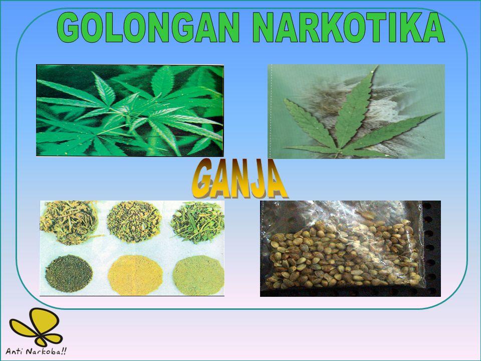 NARKOTIKA adalah Zat atau obat/bahan kimia yang berasal dari tanaman atau bukan tanaman, alamiah/ilmiah baik sintetis maupun semi sintetis yang dapat