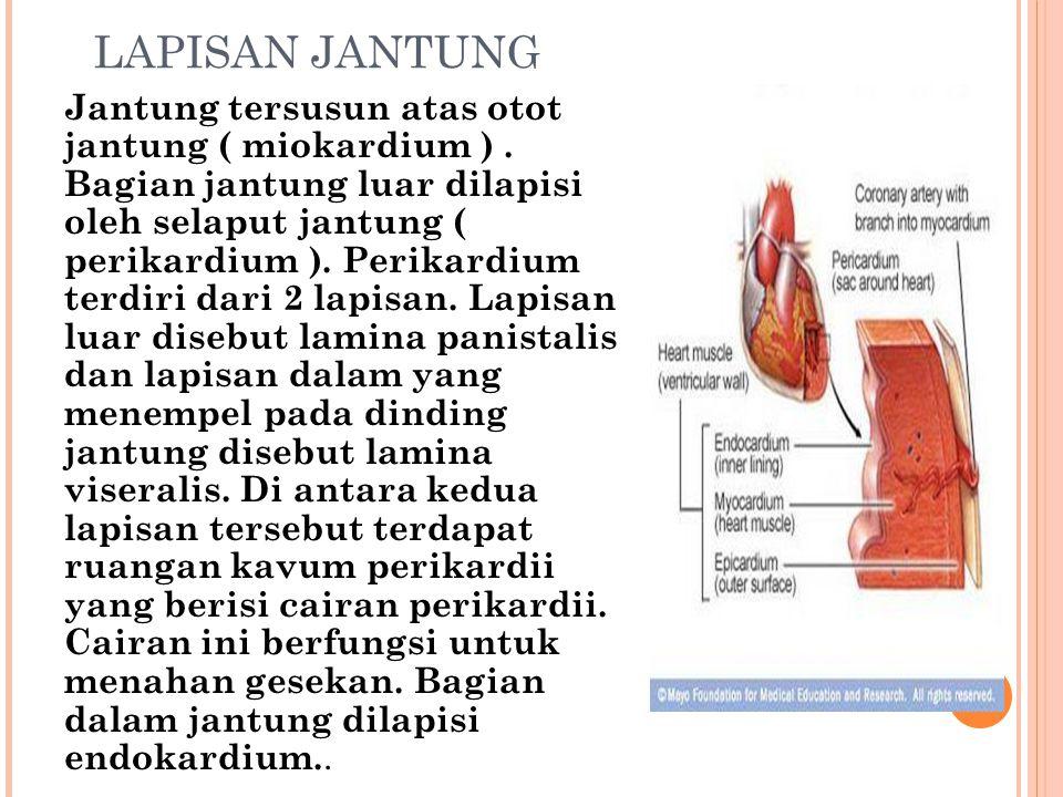 LAPISAN JANTUNG Jantung tersusun atas otot jantung ( miokardium ). Bagian jantung luar dilapisi oleh selaput jantung ( perikardium ). Perikardium terd