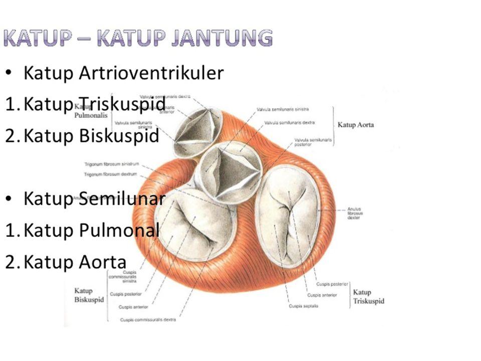 Cabang Batang Tenggorokan (Bronkus) Tenggorokan (trakea) bercabang menjadi dua bagian, yaitu bronkus kanan dan bronkus kiri. Struktur lapisan mukosa b