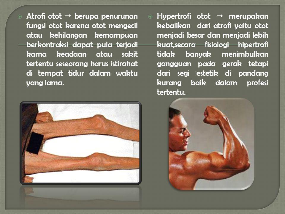  Atrofi otot  berupa penurunan fungsi otot karena otot mengecil atau kehilangan kemampuan berkontraksi dapat pula terjadi karna keadaan atau sakit tertentu seseorang harus istirahat di tempat tidur dalam waktu yang lama.