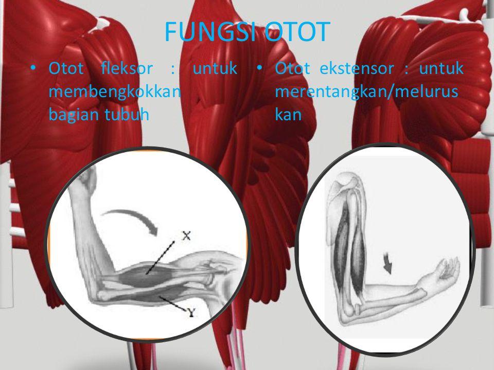 Kecapaian (fatigu)  Otot-otot yang terus menerus berkontraksi secara cepat dan kuat, lama kelamaan otot akan berkurang kontraksinya.