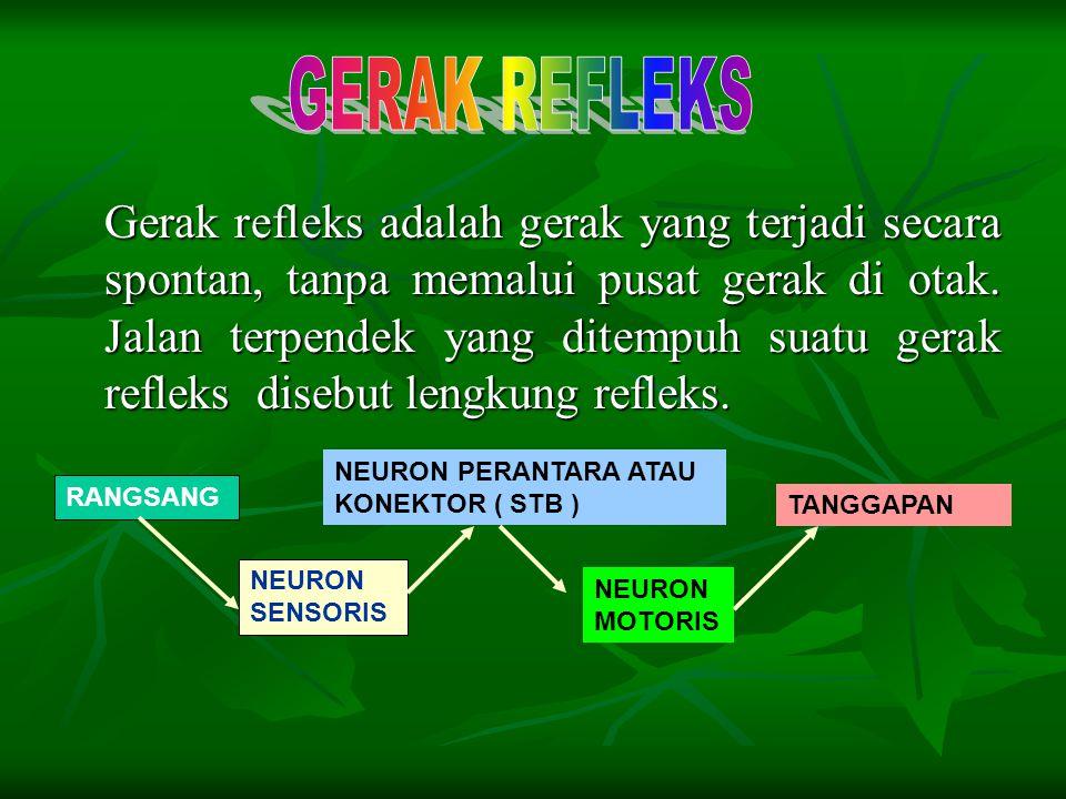Gerak refleks adalah gerak yang terjadi secara spontan, tanpa memalui pusat gerak di otak. Jalan terpendek yang ditempuh suatu gerak refleks disebut l