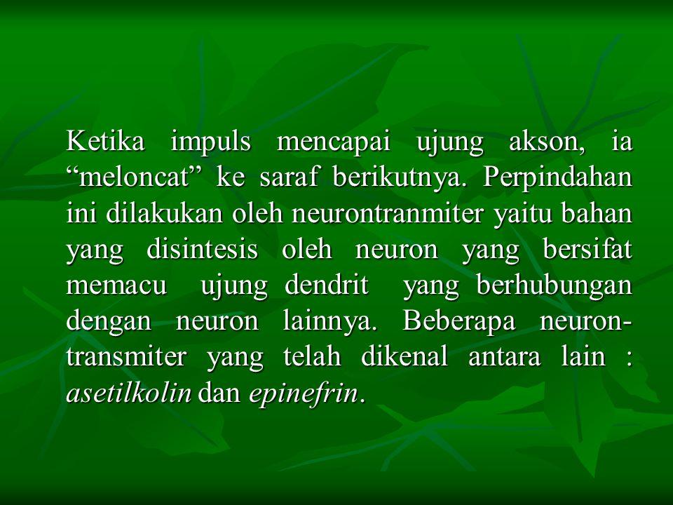  Sel saraf atau neuron mempunyai kemampuan untuk menerima dan memberikan jawaban terhadap rangsangan. Rangsangan yang diterima oleh reseptor (alat in