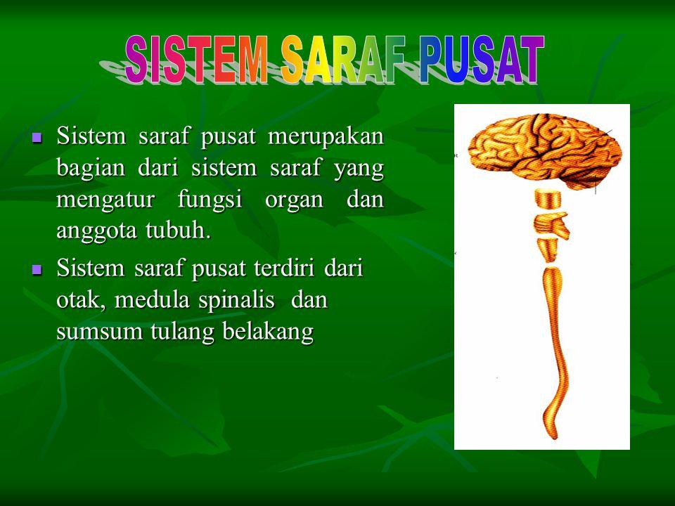 Sel saraf sensoris : membawa rangsangan (impuls) dari indera ke saraf pusat (otak dan sumsum tulang belakang) Sel saraf sensoris : membawa rangsangan