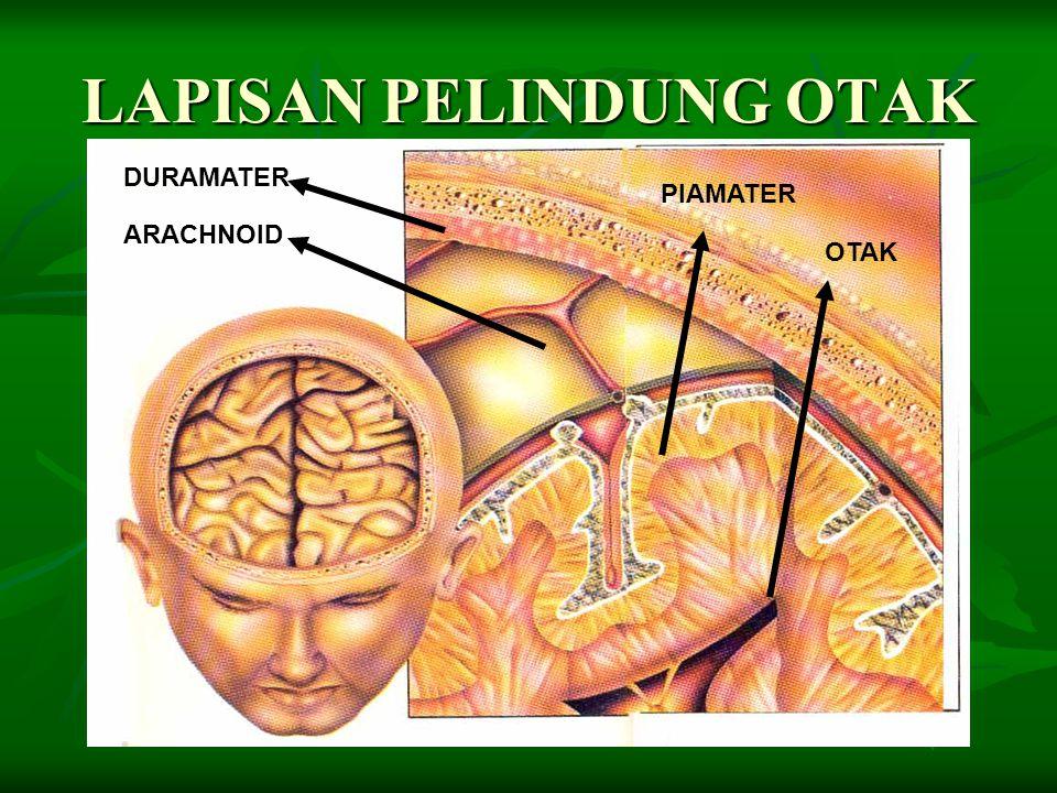 Selain dilindungi tengkorak, otak diselubugi oleh membran yang disebut meninges, yang bertugas melindungi otak dan sebagai pendukung fisik bagi otak.