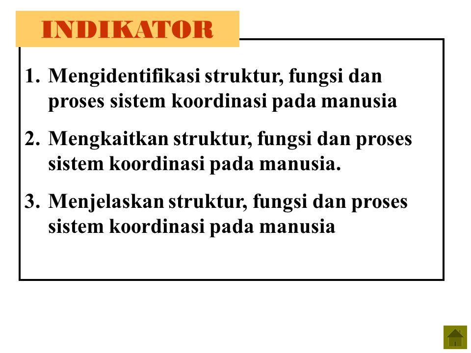 1.Mengidentifikasi struktur, fungsi dan proses sistem koordinasi pada manusia 2.Mengkaitkan struktur, fungsi dan proses sistem koordinasi pada manusia