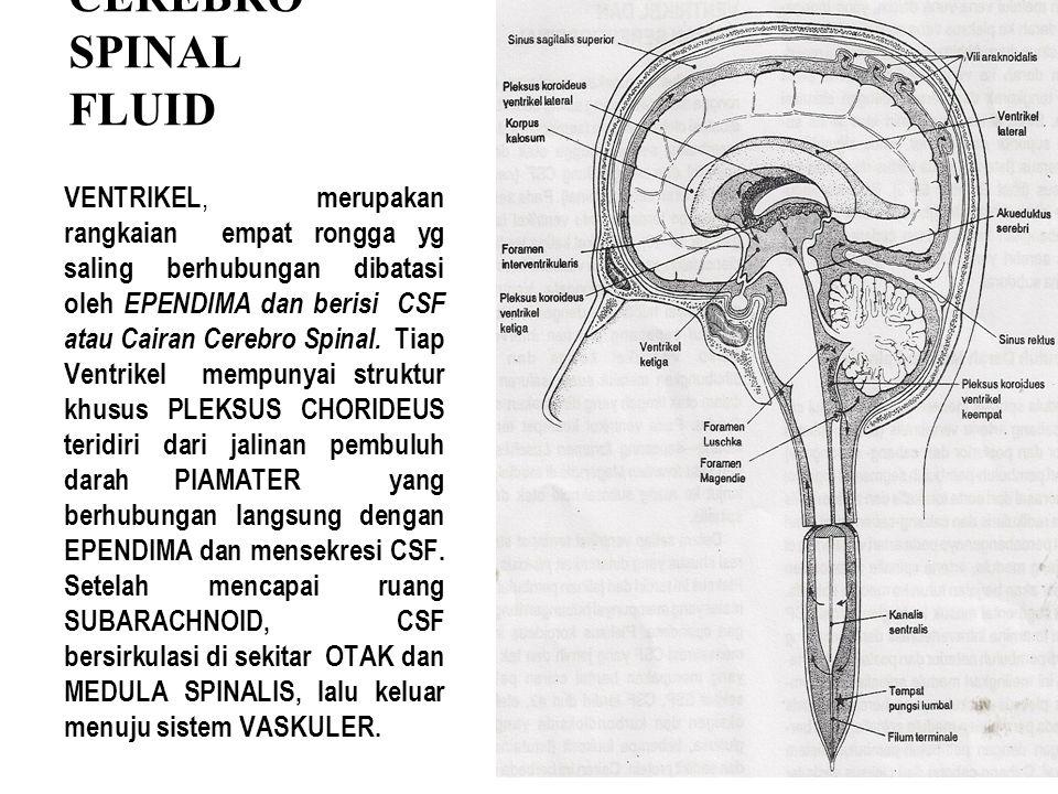 CEREBRO SPINAL FLUID VENTRIKEL, merupakan rangkaian empat rongga yg saling berhubungan dibatasi oleh EPENDIMA dan berisi CSF atau Cairan Cerebro Spina