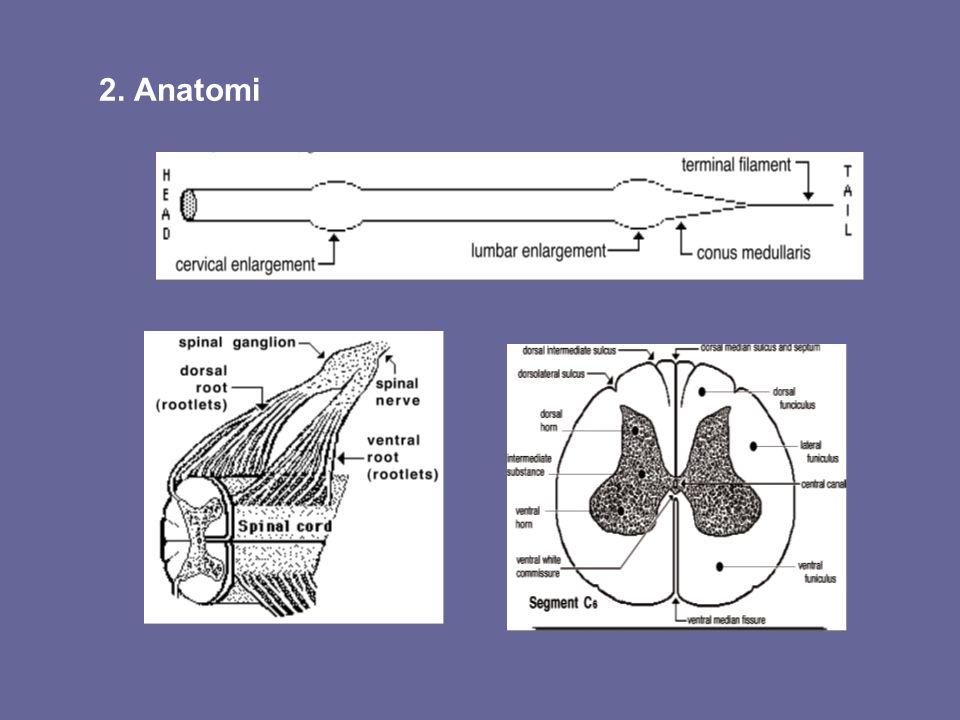 2. Anatomi