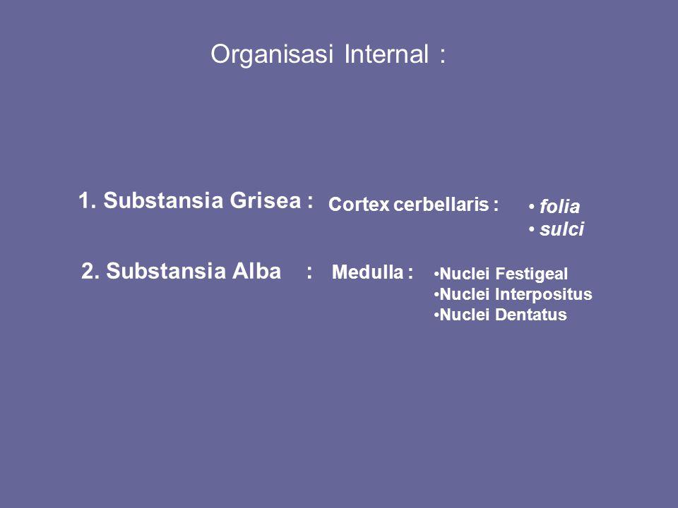 Organisasi Internal : 1.Substansia Grisea : 2. Substansia Alba : Cortex cerbellaris : folia sulci Medulla : Nuclei Festigeal Nuclei Interpositus Nucle