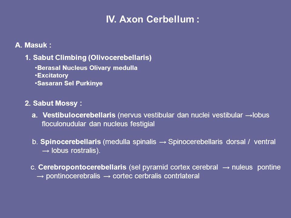 IV. Axon Cerbellum : A. Masuk : Berasal Nucleus Olivary medulla Excitatory Sasaran Sel Purkinye 1. Sabut Climbing (Olivocerebellaris) 2. Sabut Mossy :