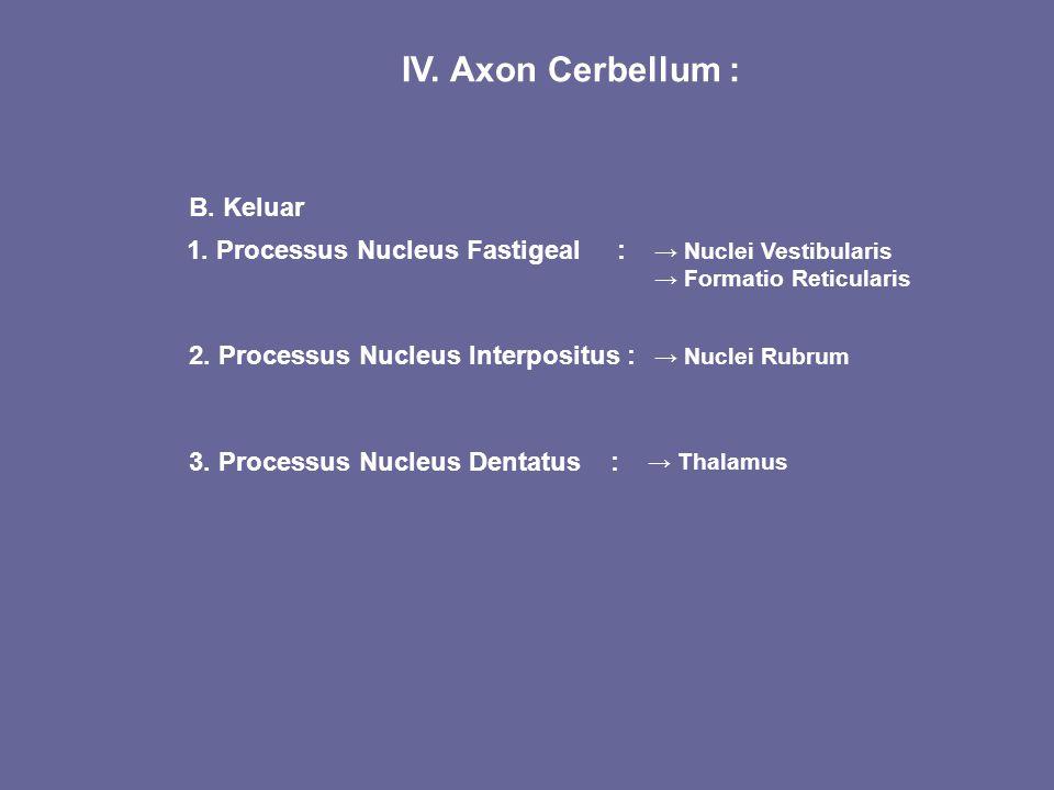 IV. Axon Cerbellum : B. Keluar 1. Processus Nucleus Fastigeal : 2. Processus Nucleus Interpositus : 3. Processus Nucleus Dentatus : → Nuclei Vestibula