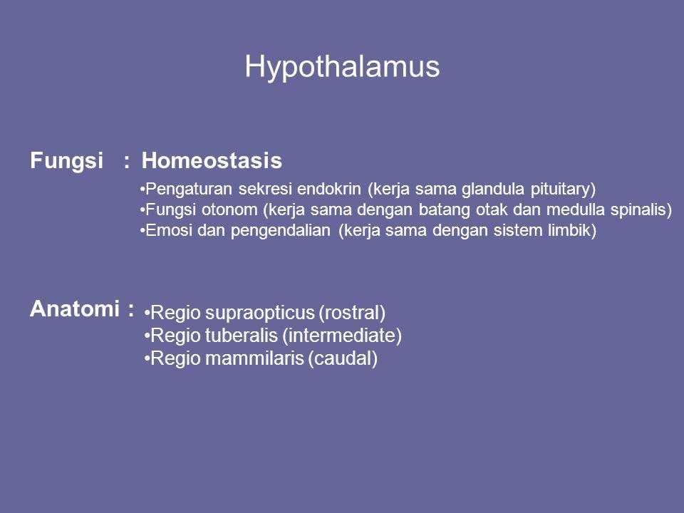 Hypothalamus Fungsi :Homeostasis Pengaturan sekresi endokrin (kerja sama glandula pituitary) Fungsi otonom (kerja sama dengan batang otak dan medulla