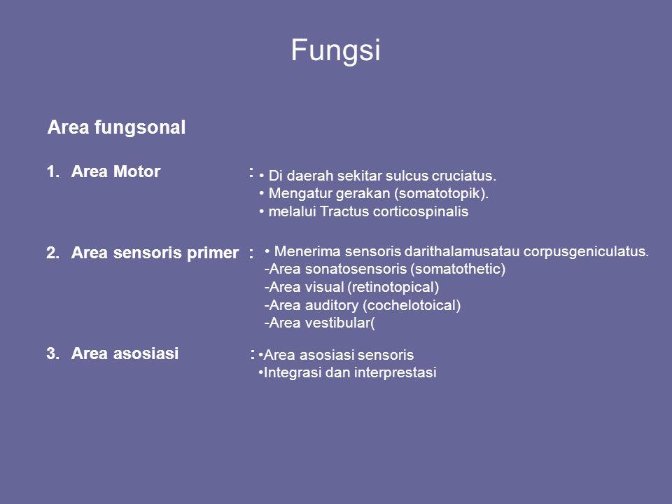 Fungsi Area fungsonal 1.Area Motor : 2.Area sensoris primer : 3.Area asosiasi : Di daerah sekitar sulcus cruciatus. Mengatur gerakan (somatotopik). me