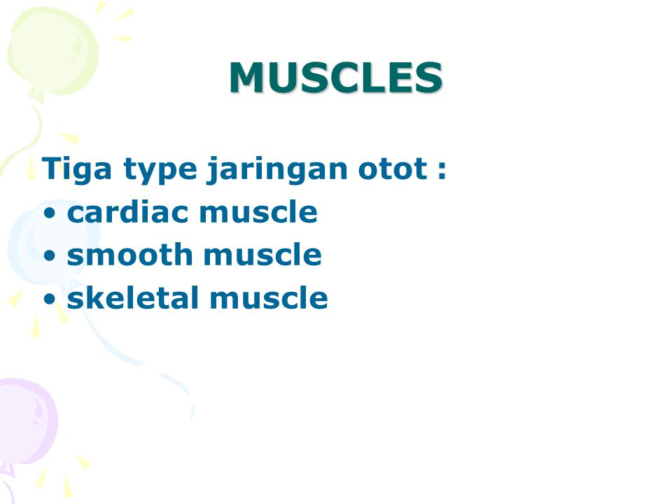 MUSCLES Tiga type jaringan otot : cardiac muscle smooth muscle skeletal muscle