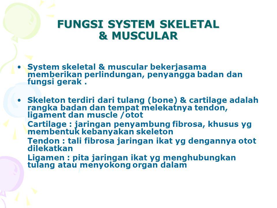 FUNGSI SYSTEM SKELETAL & MUSCULAR System skeletal & muscular bekerjasama memberikan perlindungan, penyangga badan dan fungsi gerak.