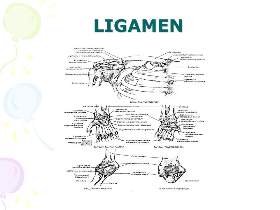 LIGAMEN