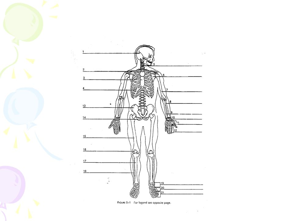 KATA-KATA YG BERKAITAN Cranium craniocele : tonjolan keluar dari setiap bagian isi kranial melalui suatu defek pada tengkorak kepala Craniomeningocele : tonjolan keluar dari membran serebral melalui suatu defek tengkorak kepala Craniomalacia : perlunakan abnormal dari tengkorak kepala cranioplasty craniotomy craniectomy Clavicle, scapula clavicular :tulang melengkung spt huruf f yg bersendi dg sternum dan scapula, membentuk bagian anterior dari gelang bahu pada kedua sisi, disebut juga collar bone scapular : tulang pipih segitiga di belakang bahu Costa (rusuk) intercostal musclessubcostal sternocostalcostectomy