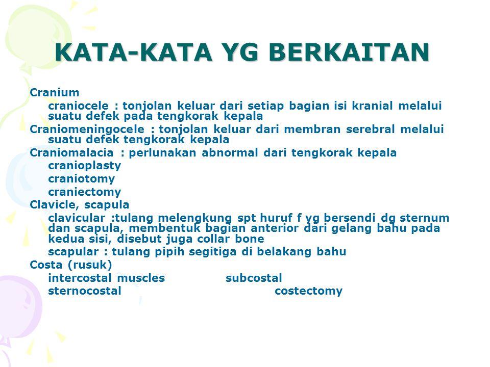 KATA-KATA YG BERKAITAN sternum sternal puncture substernal vertebra - spondyl/o – rachi/o – rach/i intervetebral spondylomalacia spondylitis cervical vertebrae rachidynia (rach/i dan rachi/o) rachialgia carpal carpectomy phalang phalangitis