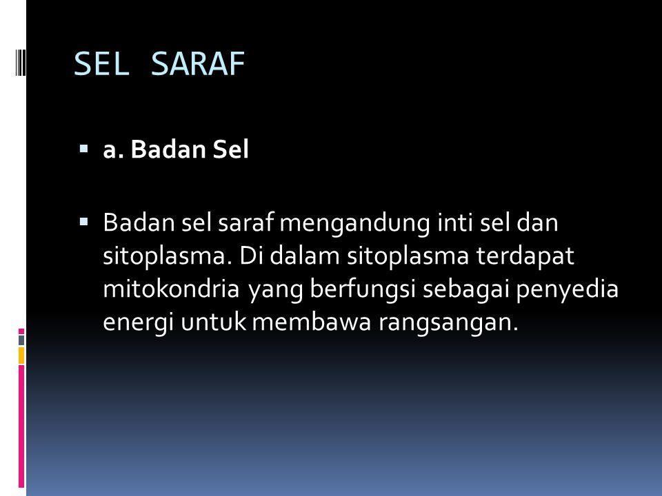 SEL SARAF  a. Badan Sel  Badan sel saraf mengandung inti sel dan sitoplasma. Di dalam sitoplasma terdapat mitokondria yang berfungsi sebagai penyedi
