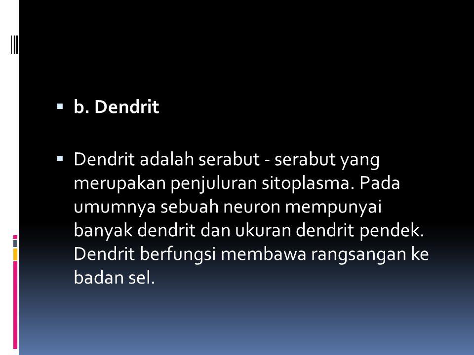  b. Dendrit  Dendrit adalah serabut - serabut yang merupakan penjuluran sitoplasma. Pada umumnya sebuah neuron mempunyai banyak dendrit dan ukuran d
